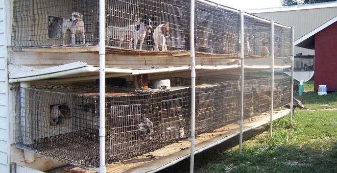 How To Stop Puppy Mills | Companion Animal Protection Society