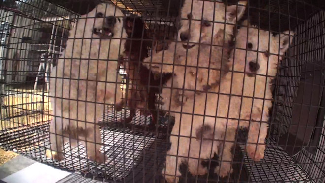 Illinois and Tennessee Puppy Mills Working Together